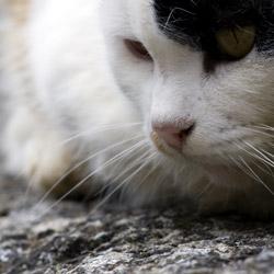 corte-Corsica-france-town-cats